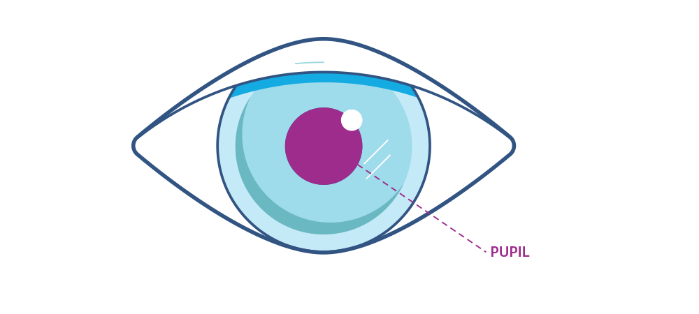 Illustration showing the eye's pupil.